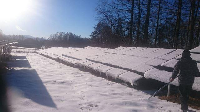 太陽光パネル雪