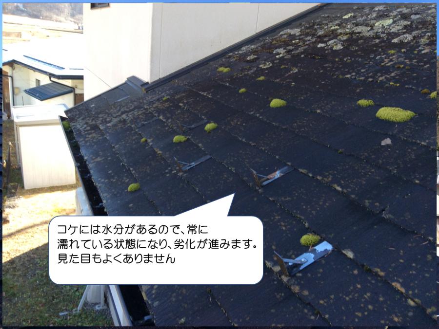 スレート屋根コケの発生