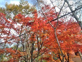 茅野市蓼科高原『三井の森』の別荘の外壁工事をさせていただきました